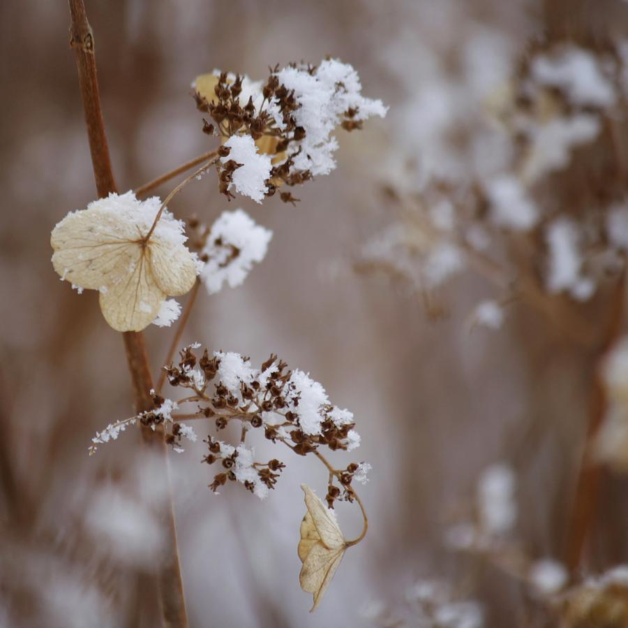 Winter Garden Photograph by Marie-josée Lévesque