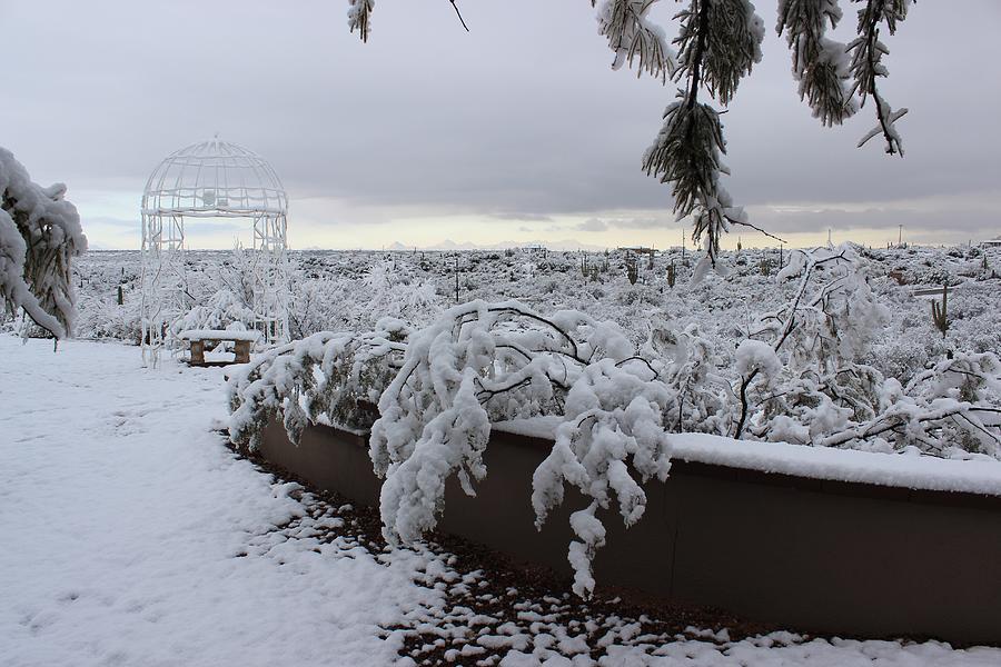 Winter in Arizona No.1 by Kume Bryant