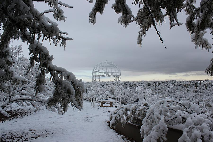 Winter in Arizona No.2 by Kume Bryant
