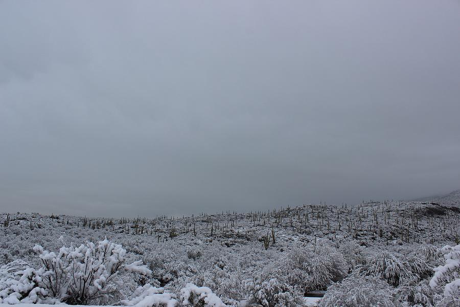 Winter in Arizona No.5 by Kume Bryant