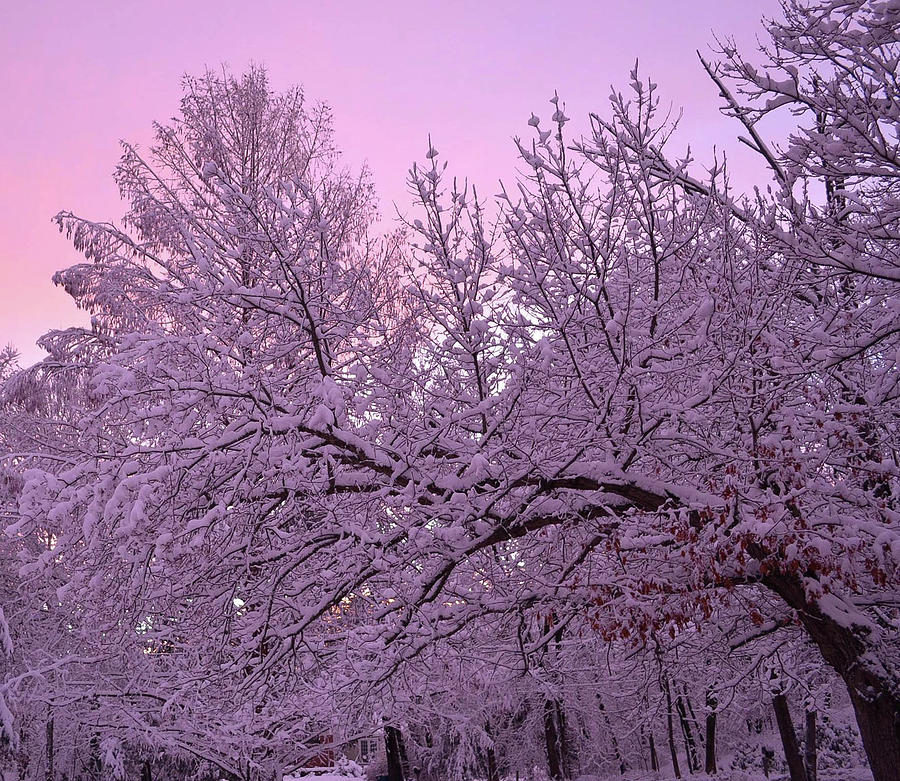 Winter Photograph - Winter In New England by Leslie Carbone
