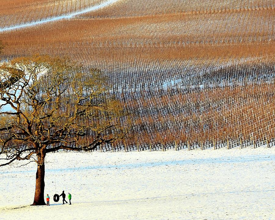 Winter In The Vineyard by Jerry Sodorff