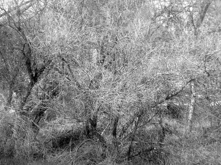 Winter Lace 2019 001 by Michael Genevro