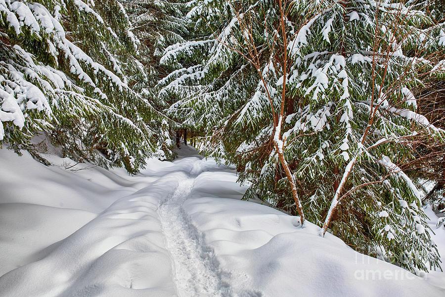 Winter landscape by Catalin Petolea