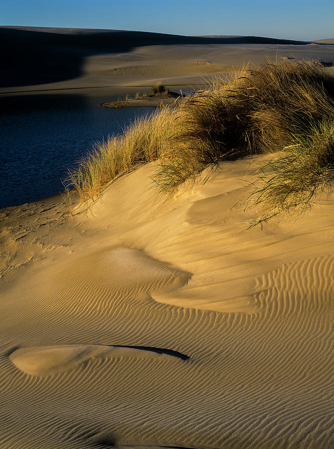 Winter Light and Sand by Robert Potts