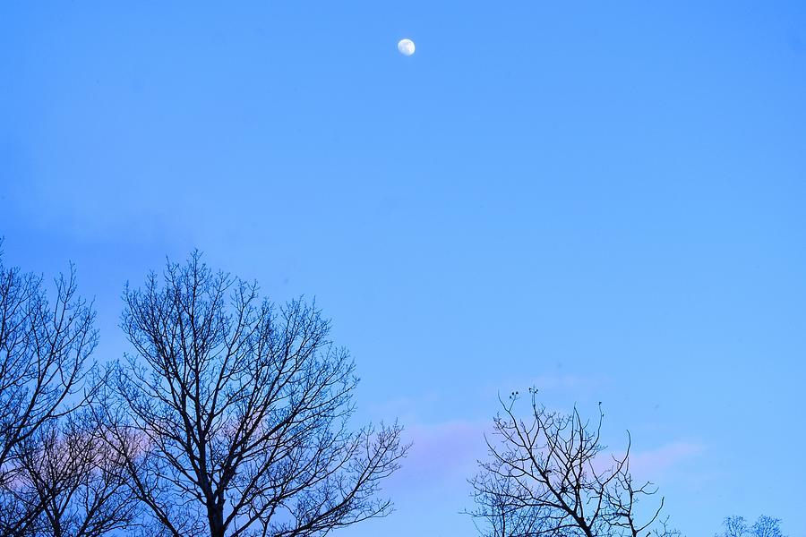 Winter Moon Sighting by Nina Kindred