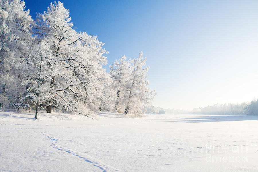 Country Photograph - Winter Park In Snow by Ozerov Alexander