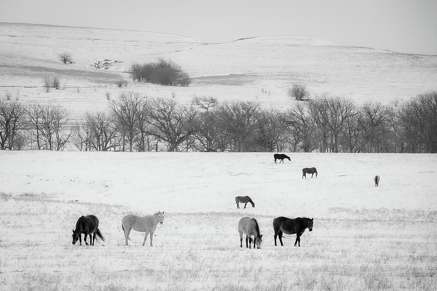 Horse Photograph - Winter Pasture by Jeff Phillippi