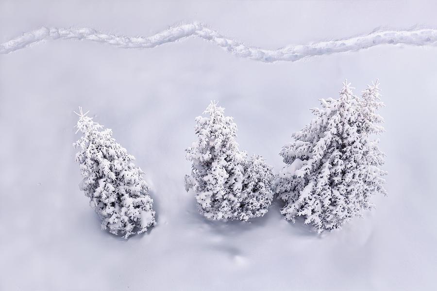 Winter Path Photograph by Borchee