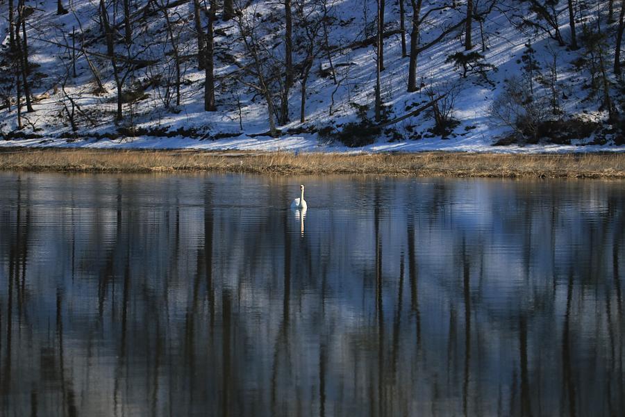 Winter Peace by Karen Silvestri
