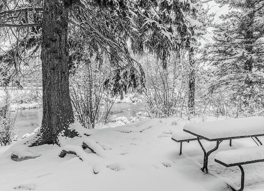 Winter Picnic by Tom Potter