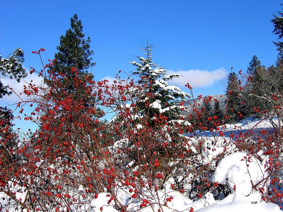 Winter Sanctuary by Will Borden