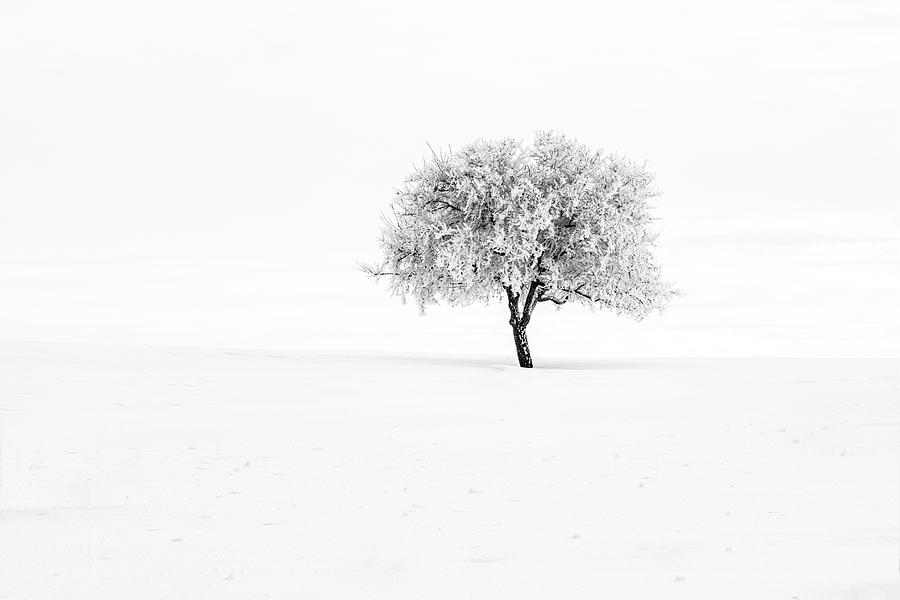 Winter Silence by Mark Kiver