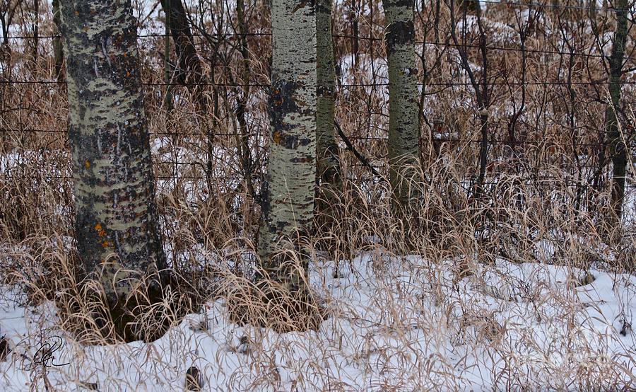 Winter Snow Fall Grass by Ann E Robson