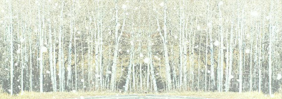 Winter Snow by Marcia Lee Jones