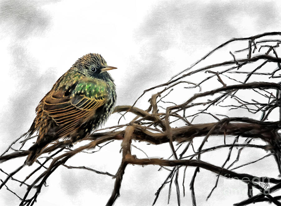 Winter Starling Waiting by Lois Bryan