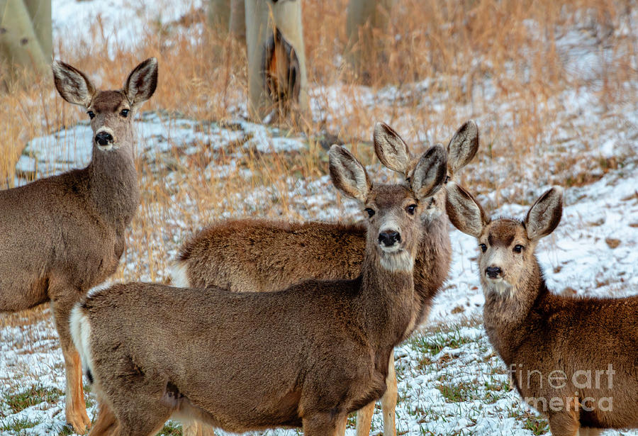 Winter Storm Deer Photograph