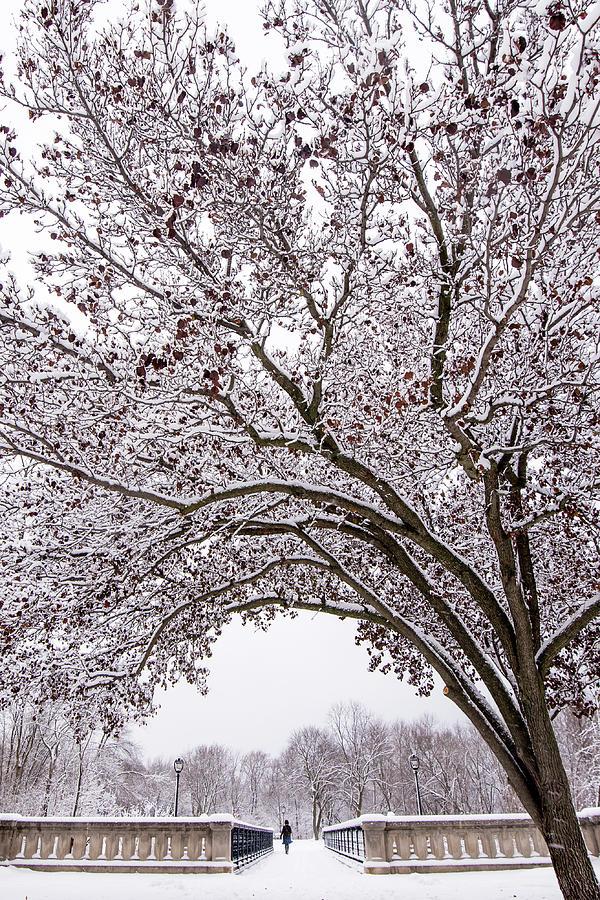 Winter Stroll by Josh Eral
