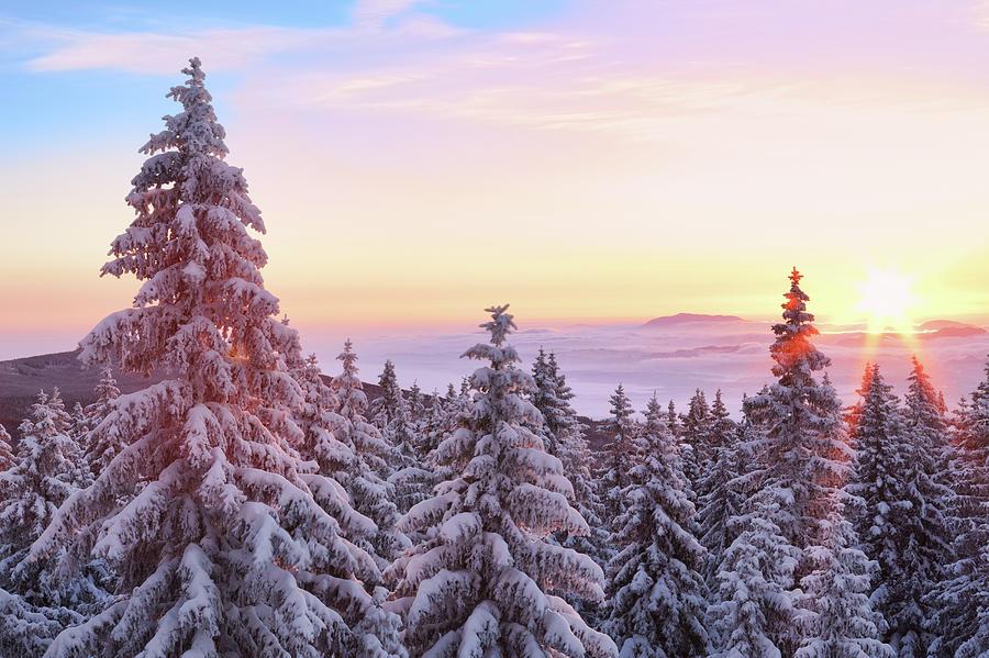 Winter Sunrise Photograph by Borchee