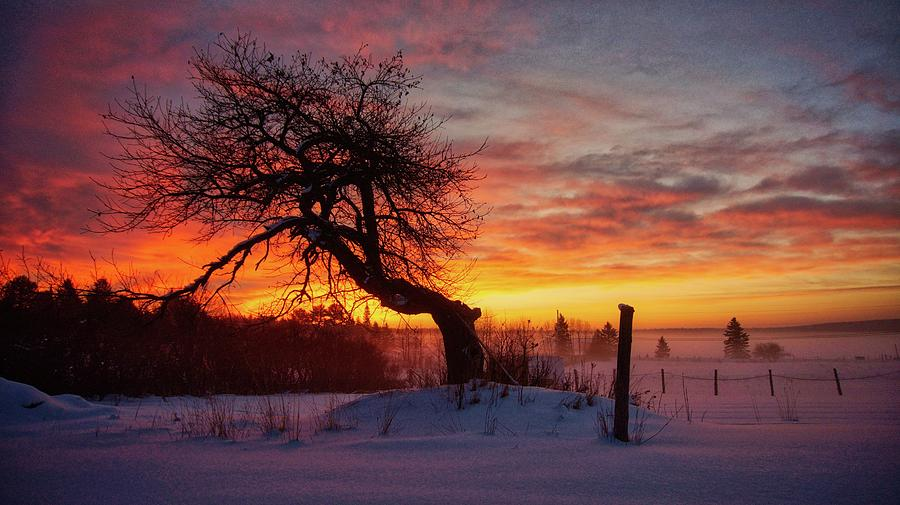 Winter Sunrise on the Old Apple Tree by Bryan Smith