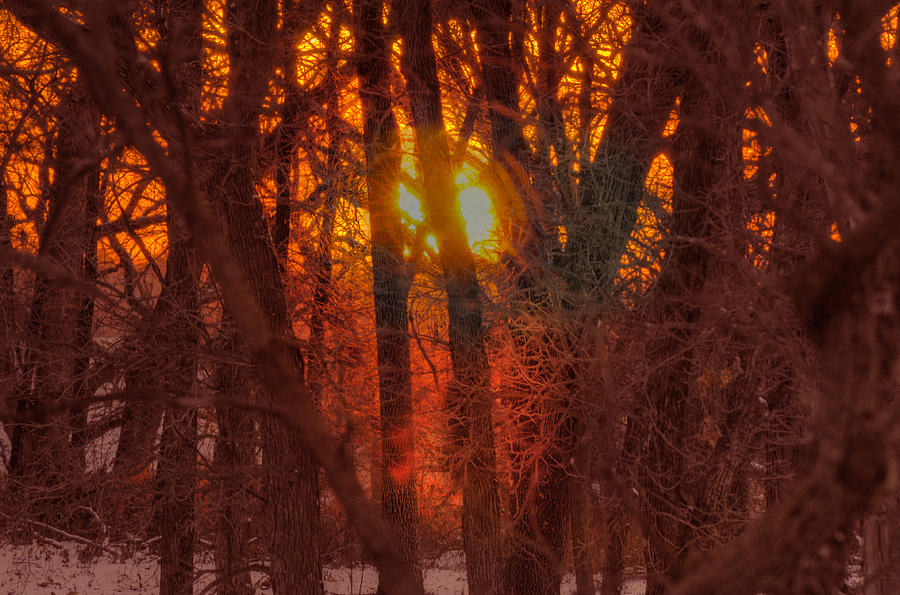 Winter Sunset in Forest by Don Wolf