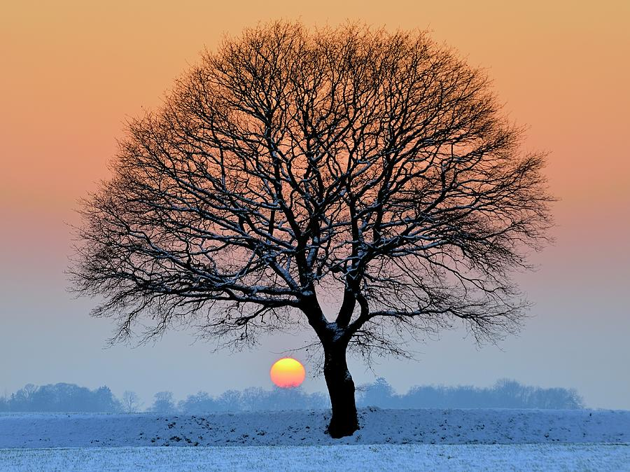 Winter Sunset With Silhouette Of Tree Photograph by Pierre Hanquin Photographie