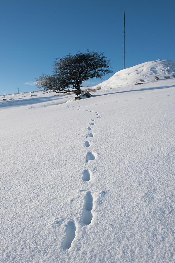 Winter Tree and Footprints by Helen Northcott