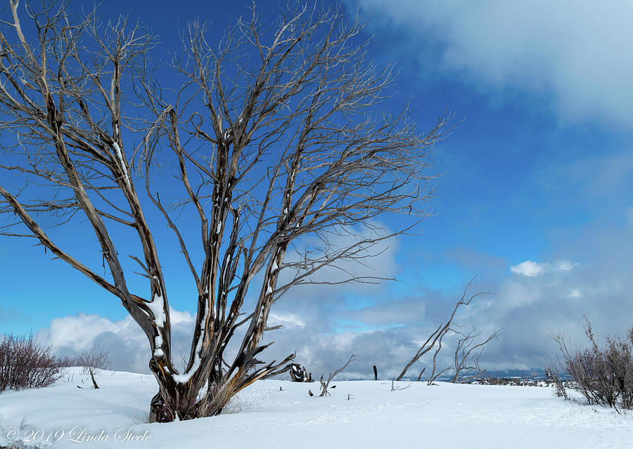 Winter Tree Blues by Linda Steele