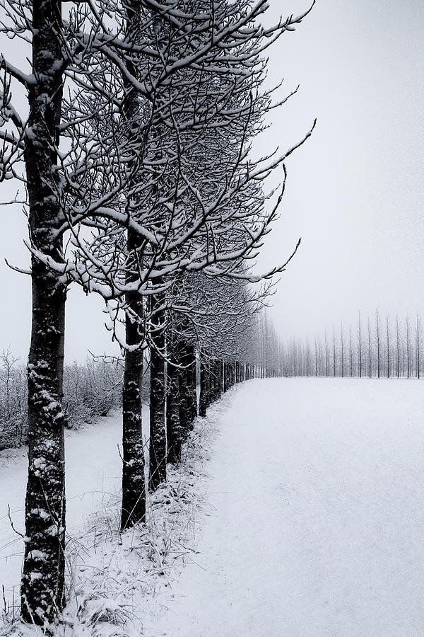 Winter Tree Line by David Soldano