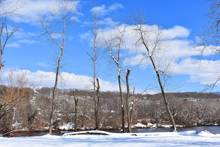 Winter Trees Against the Sky by Nina Kindred