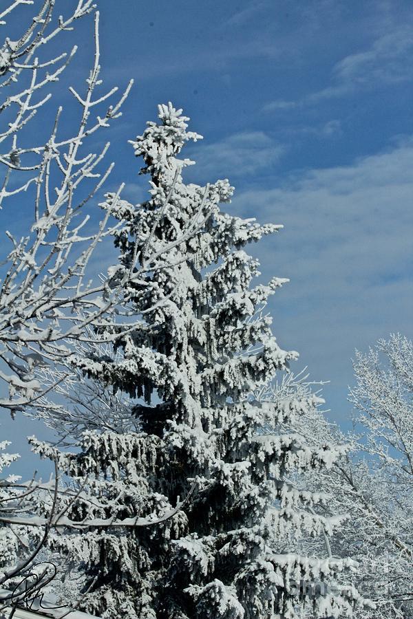 Winter Trees by Ann E Robson