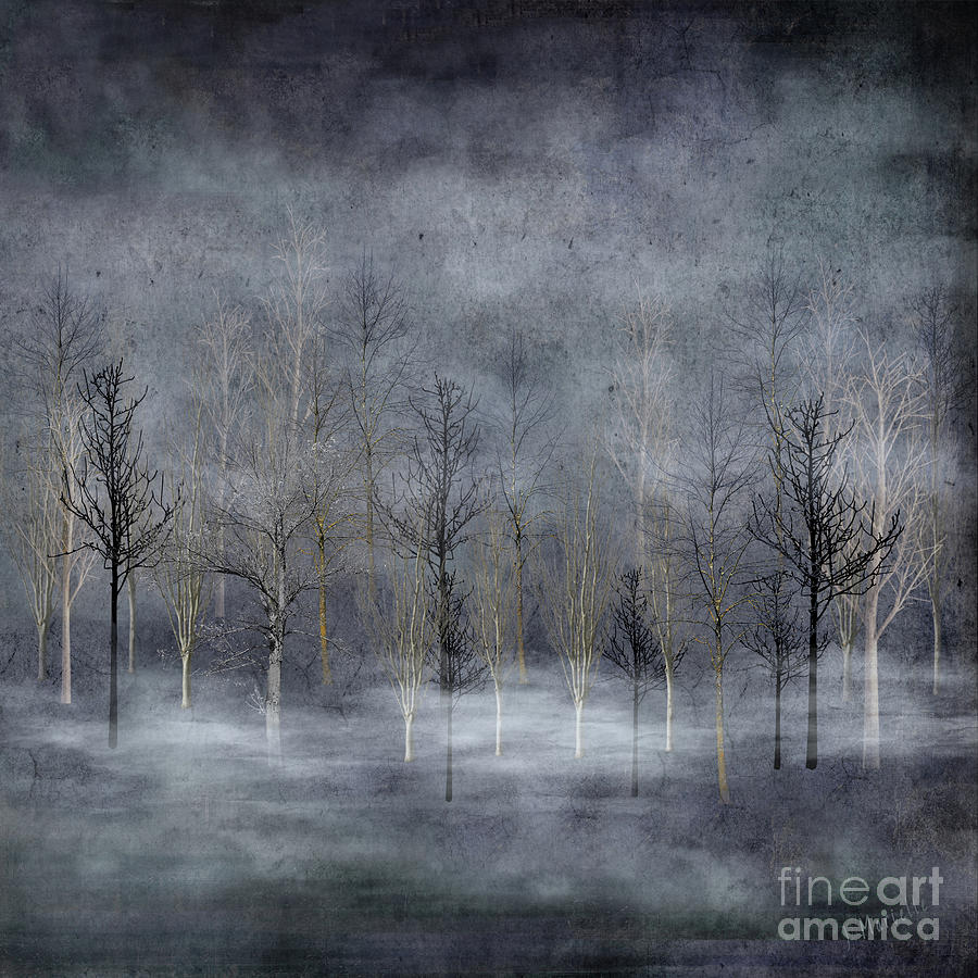 Winter Trees in Misty Fog by J Marielle