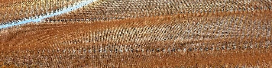 Winter Viineyard Texture by Jerry Sodorff
