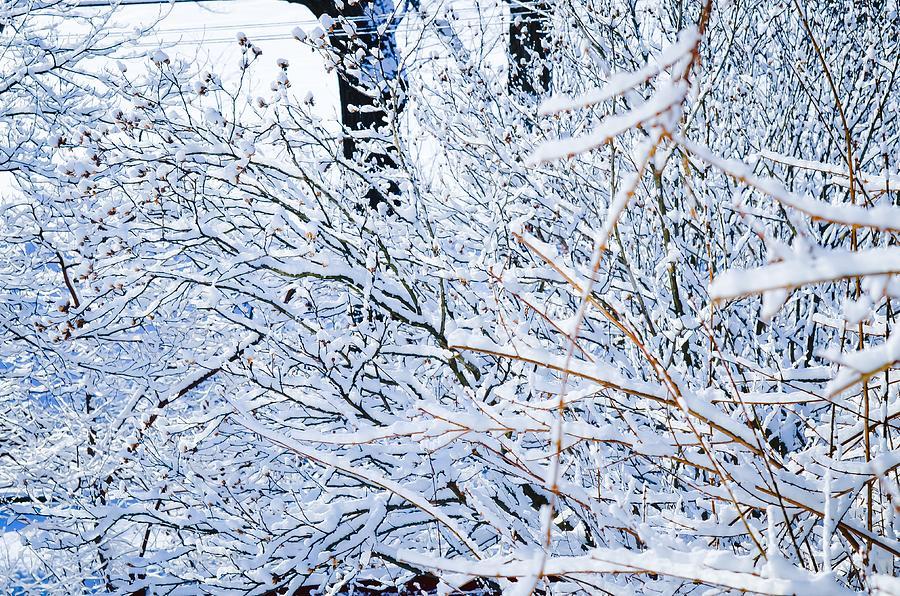 Winter Wonderland New Jersey by Maureen E Ritter