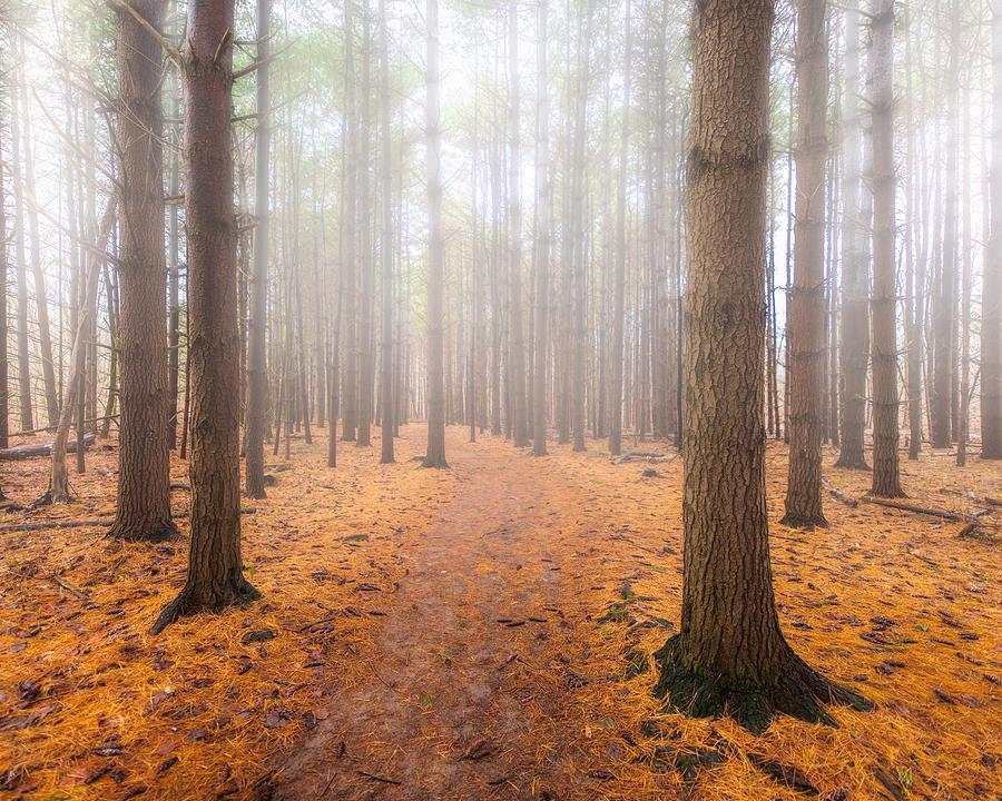 Winter Woods 3 by Matt Hammerstein