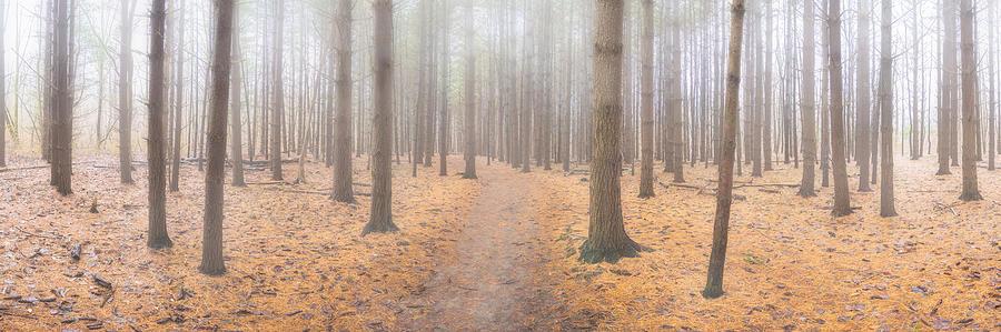 Winter Woods 4 by Matt Hammerstein