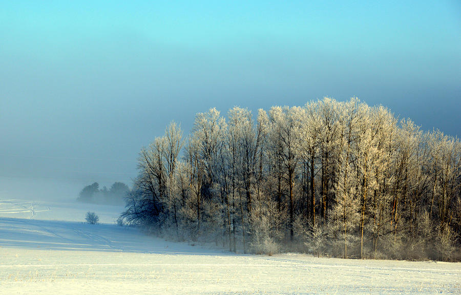 Winter's Heavy Frost by SimplyCMB