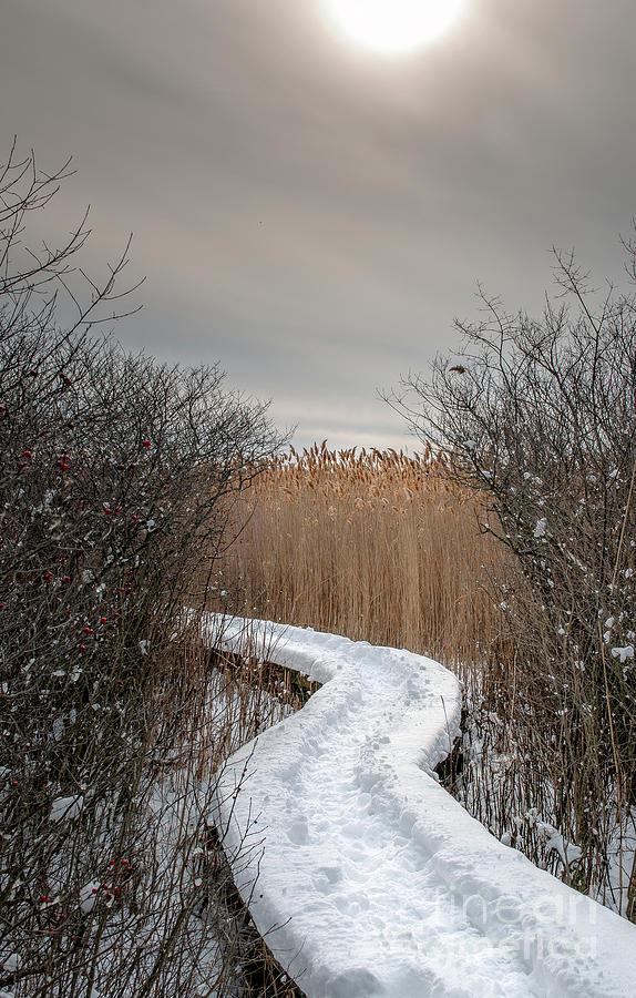 Winters Path Photograph