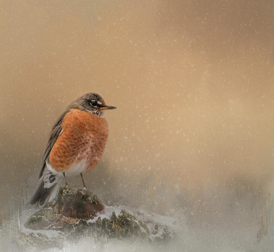 Winters Solitude by Kelley Parker