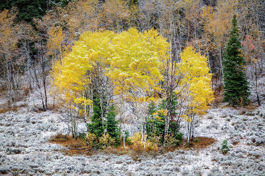 Wintry Patch of Fall by Michael Ash