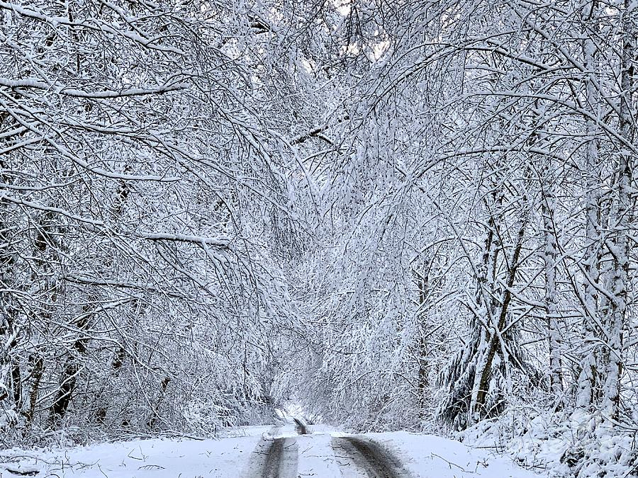 Wintry Road by Sean Griffin