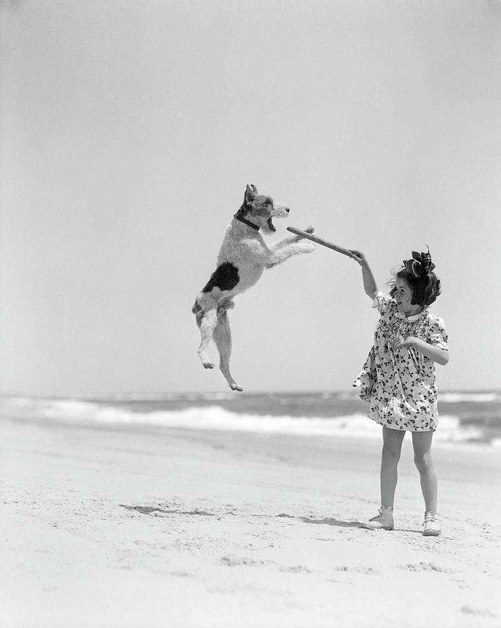 Wire Haired Terrier Dog Jumping In The Photograph by H. Armstrong Roberts