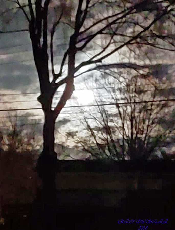 Moonlight Photograph - Wired Moonlight by Robyn Louisell