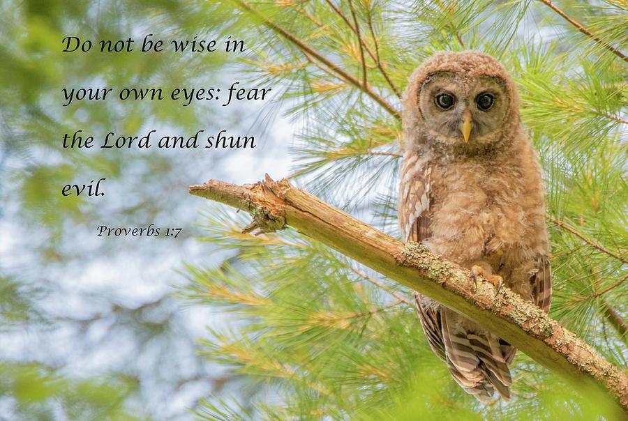 Wisdom by Marcy Wielfaert