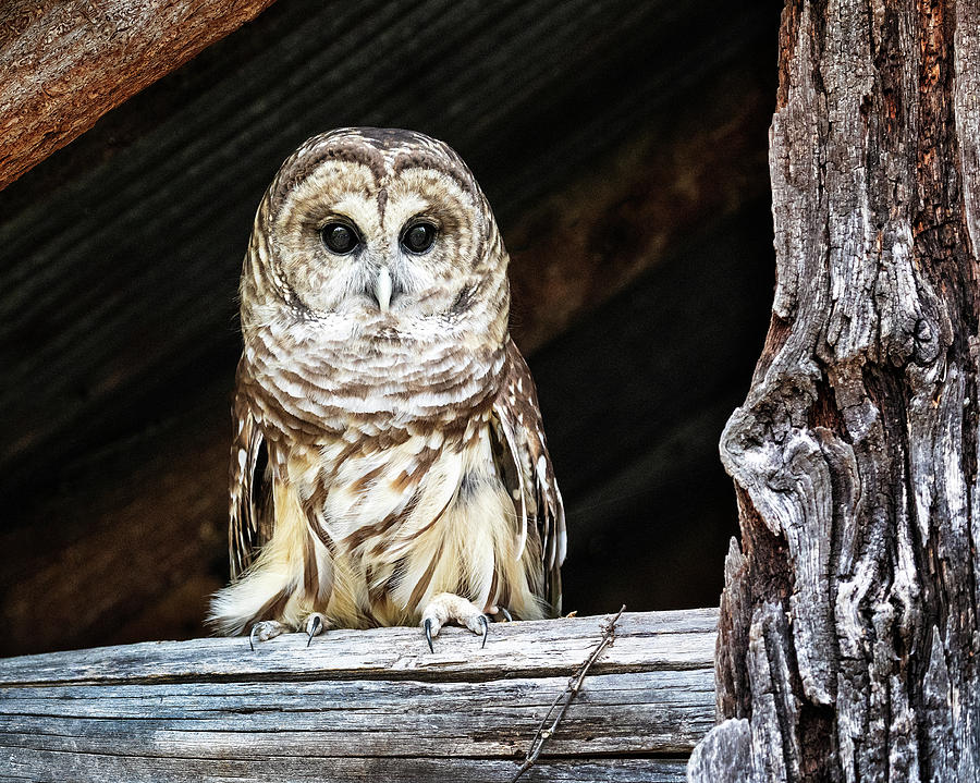 Wise Old Owl by Jaki Miller
