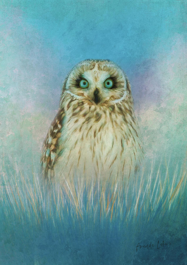 Texture Mixed Media - Wise Owl by Amanda Lakey