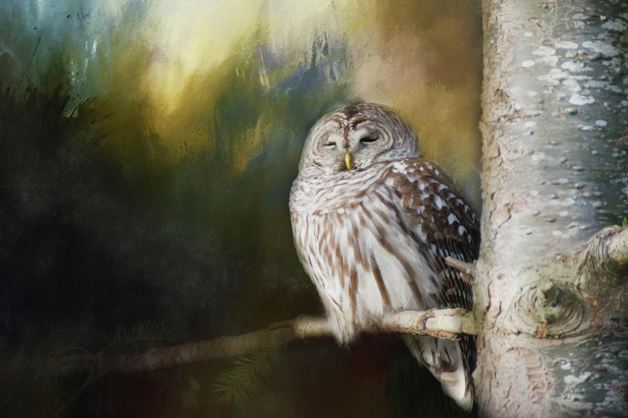 Wise Owl by Marilyn Wilson