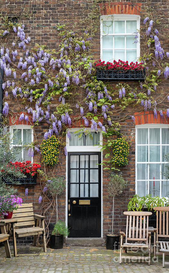 Wisteria and Window Boxes by Tim Gainey
