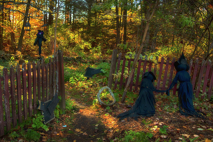 Witches Garden by Joann Vitali