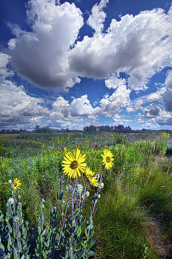 With A Chance Of Sun by Phil Koch
